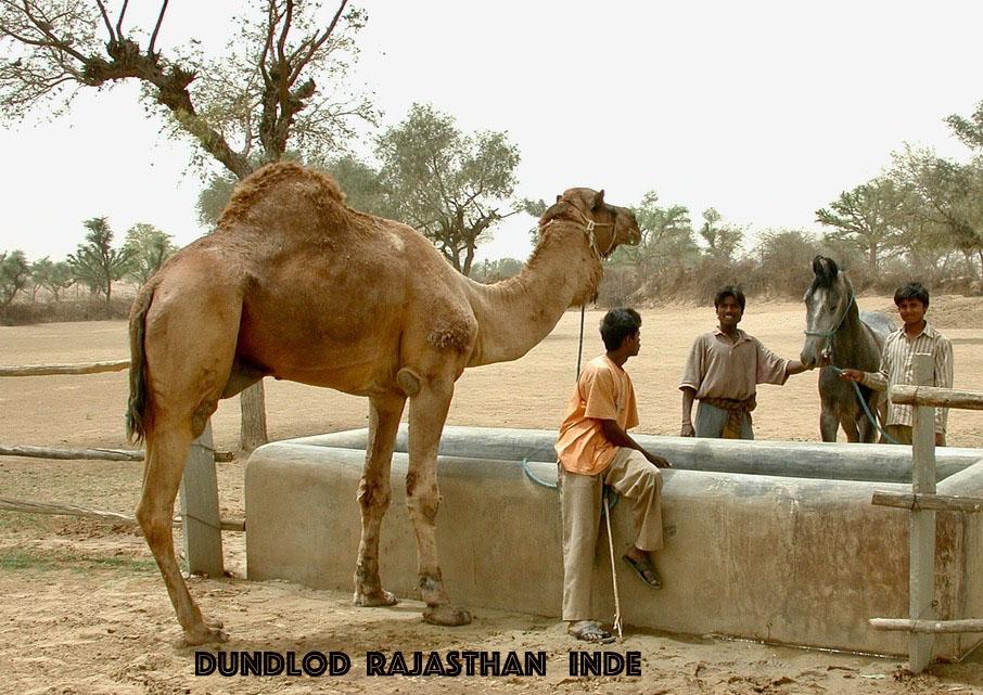 Dundlod Camel 1