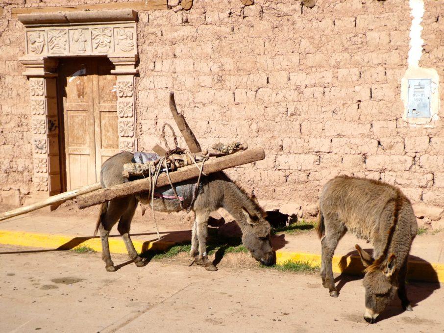 Pérou août 2018